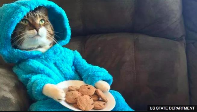 Oh crumbs! Cookie Monster cat invite sent in error, says US Embassy