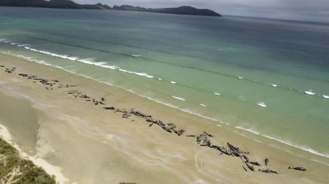 Video shows mass whale stranding in Stewart Island