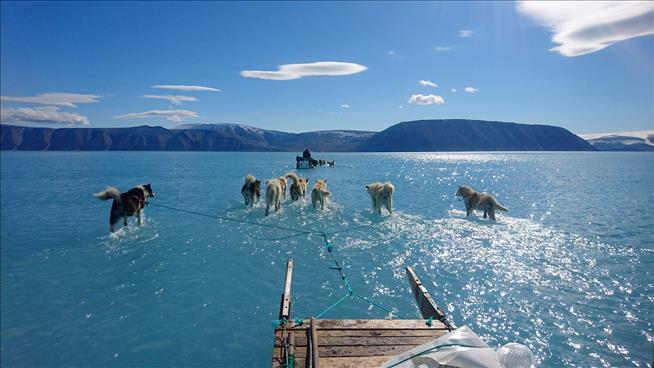 Photo appearing to show dogs walking on water highlights Greenland's melting ice
