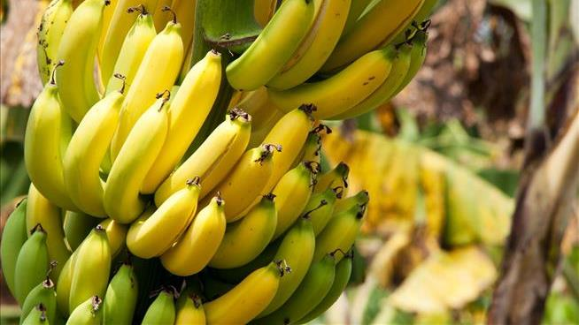 The Planet's Banana Woes Are Multiplying