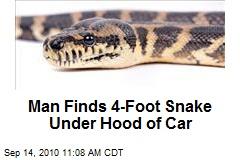 Man Finds 4-Foot Snake Under Hood of Car