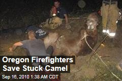 Oregon Firefighters Save Stuck Camel