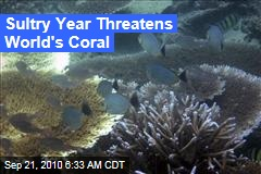 Sultry Year Threatens World's Coral