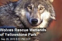 Wolves To The Rescue