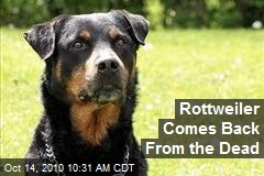 Rottweiler Comes Back From the Dead