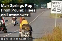 Man Springs Pup From Pound; Escapes on Lawnmower