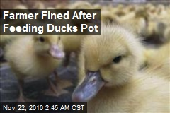 Farmer Fined After Feeding Ducks Pot