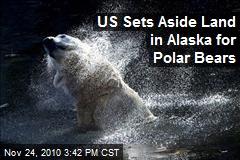 US Sets Aside Land in Alaska for Polar Bears