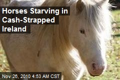 Horses Starving in Cash-Strapped Ireland