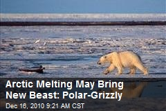 Arctic Melting May Bring New Beast: Polar-Grizzly