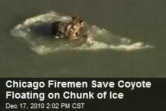 Floating Coyote Rescued Off Chicago Shoreline