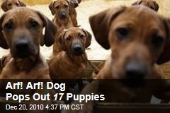 Arf! Arf! Dog Pops Out 17 Puppies