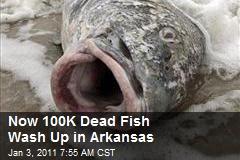 Now 100K Dead Fish Wash Up in Arkansas