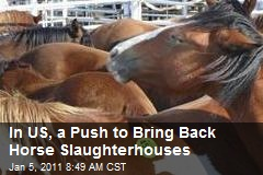 In US, a Push to Bring Back Horse Slaughterhouses