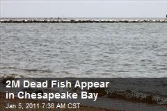 2M Dead Fish Appear in Chesapeake Bay