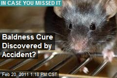 'Baldness Cure' Stuns Mouse Researchers