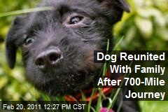 Dog Reunited With Family After 700-Mile Journey