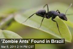 'Zombie Ants' Found in Brazil
