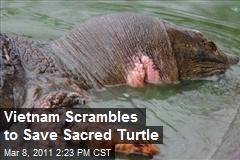 Vietnam Scrambles to Save Sacred Turtle