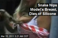 Snake Nips Model's Breast, Dies of Silicone
