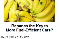 Bananas the Key to More Fuel-Efficient Cars?