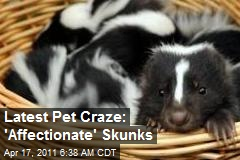 Latest Pet Craze: 'Affectionate' Skunks