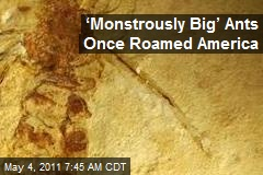 'Monstrously Big' Ants Once Roamed America