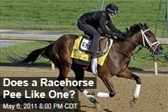 Will Kentucky Derby Racehorses Pee Like Racehorses?