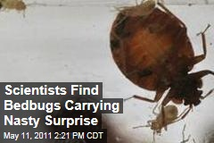 Scientists Find Bedbugs Carrying Nasty Surprise: MRSA, the Superbug Germ