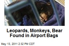 Leopards, Monkeys, Bear Found in Airport Bags
