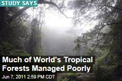 Study Shows 90% of World's Tropical Forests Managed Poorly