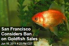 San Francisco Weighs Ban on Goldfish, Tropical Fish, Guppy Sales