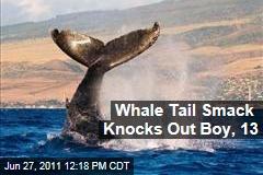 Humpback Whale's Tail Smacks Boy in Australia