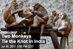 Two Monkeys Get Married in India