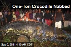 One Ton Crocodile Nabbed