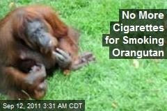 Smoking Orangutan Going Cold Turkey