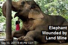 Elephant Wounded by Land Mine