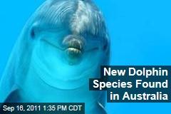 New Dolphin Species, the Burrunan Dolphin, Found in Australia