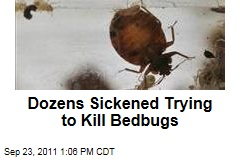 Insecticides a Bigger Threat Than Bedbugs: Study