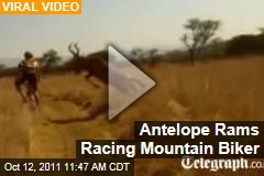 VIDEO: Antelope Slams Into Racing Mountain Biker