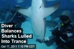 Italian Diver Induces Trance in Sharks to Remove Parasites, Fishing Hooks