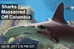 Thousands of Sharks Killed Near Malpelo, Off Colombia