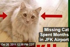 Jack the Cat Spent Months in JFK Airport