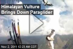 Himalayan Vulture Brings Down Paraglider