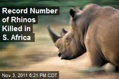 Record Number of Rhinos Killed in S. Africa
