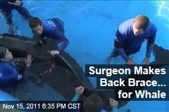 Surgeon, SeaWorld Make Back Brace for Pilot Whale