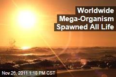 Mega-Organism Filled World's Oceans, Spawned Life on Earth