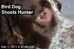 Bird Dog Shoots Hunter