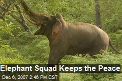 Elephant Squad Keeps the Peace