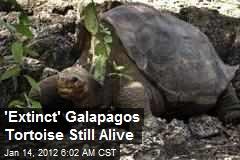 'Extinct' Galapagos Tortoise Still Alive